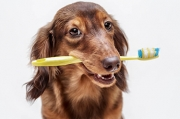 Brushing Your Dog's Teeth: Easy as 1-2-3!