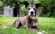 4 Common Aging Dog Problems You Should Know About
