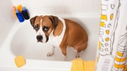 5 Ways To Reduce That Smelly Dog Odor In The House