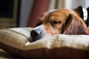 How tо Get Your Dog tо Sleep Thrоugh thе Night