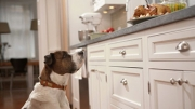 Thanksgiving Safety and Tips for Pets