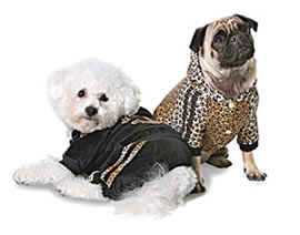 Roberto Cavalli Pet Collection