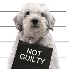 dog-not-guilty