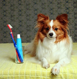 dog oral care unleash mag