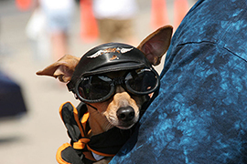 dog-in-shades-unleash-mag
