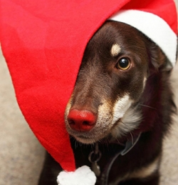 Holiday gift guide 2014: Presents to pamper your pet