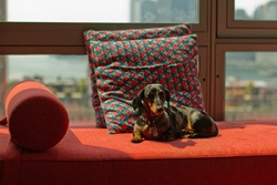 How To Choose A Pet Friendly Sofa