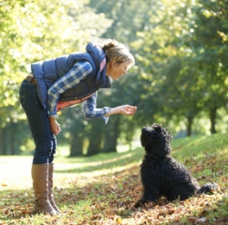 "Establishing ""Pecking Order"" With Your Dog"