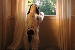 7 Steps To Handle Your Dog's Separation Anxiety