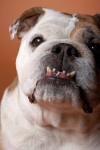 Keeping Your Dog's Teeth Healthy