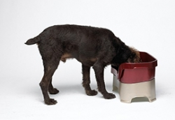 Does Your Dog Spill Water or Food When Eating? Check Out the Neater Feeder!