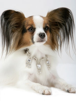 World's Most Expensive Dog Collar