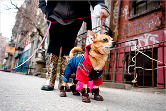 winter booties for dogs